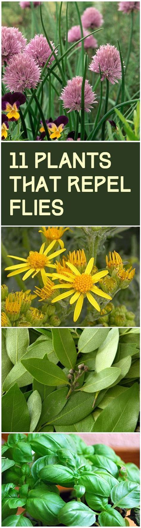 Keeping Flies Away From Patio by Best 25 Landscaping Around Deck Ideas On