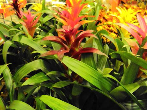 home depot flowers on plants to grow
