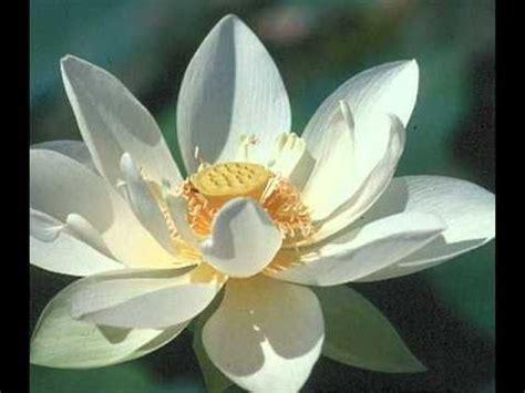 imagenes filosofia zen filosofia zen youtube