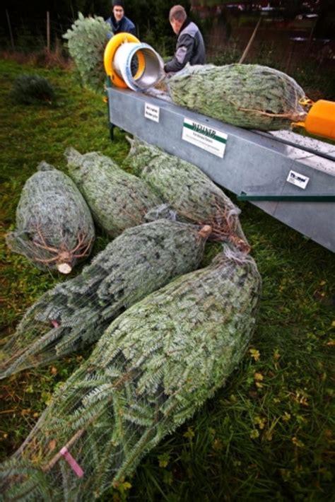 christbaumverkauf in sulzbach oh tannenbaum spitze