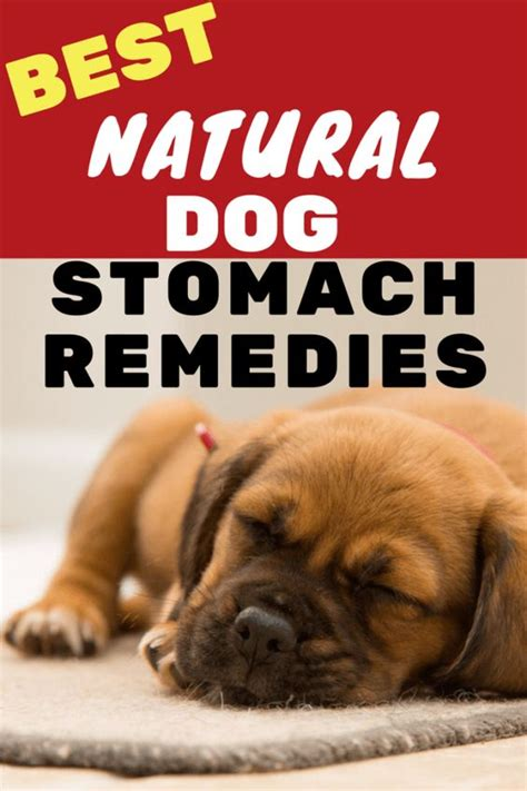 Home Remedies For Small Dogs With Diarrhea Home Remedy For Diarrhea In Dogs