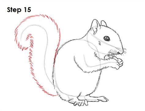How To Draw A Ground Squirrel ground squirrel drawing