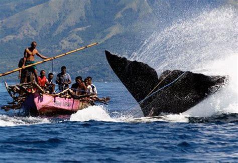 cardume indon 233 sia pesca artesanal de baleia