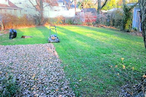 winter lawn care winter lawn care tips home decoration