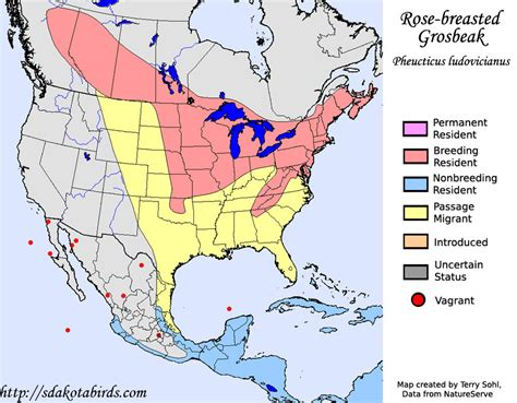 rose breasted grosbeak species range map