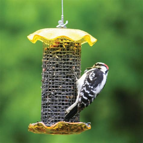 shop birds choice sunflower steel tube bird feeder at