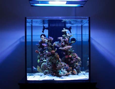 design reef aquarium reef aquarium aquarium reef coral reef aquariums