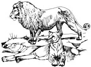 free lion clipart 1 page of public domain clip art