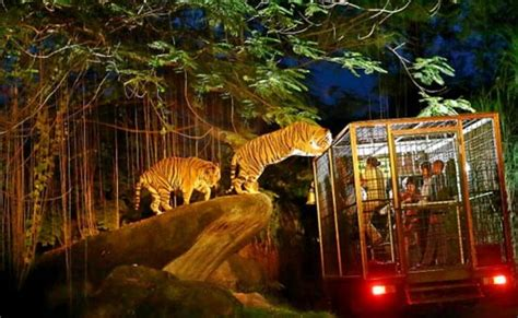 night safari singapore flat