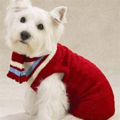 knitting pattern for westie dog coat 17 best images about dogs in sweaters on pinterest snow