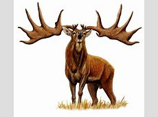 Descubren en Asturias una cría de mamut y uno de los ... Irish Elk