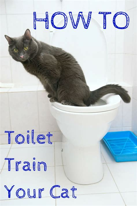 How To Keep Cat Litter The Floor by Best 20 Cat Litter Boxes Ideas On