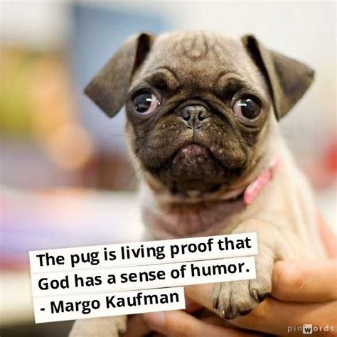 god pugs 147 best images about pugs on pug pug and black pug