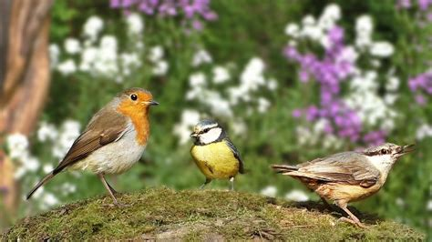 bird sounds for cats beautiful birds in the flower