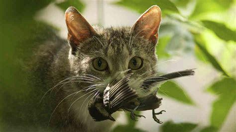 killer kitties cats kill billions of creatures every year