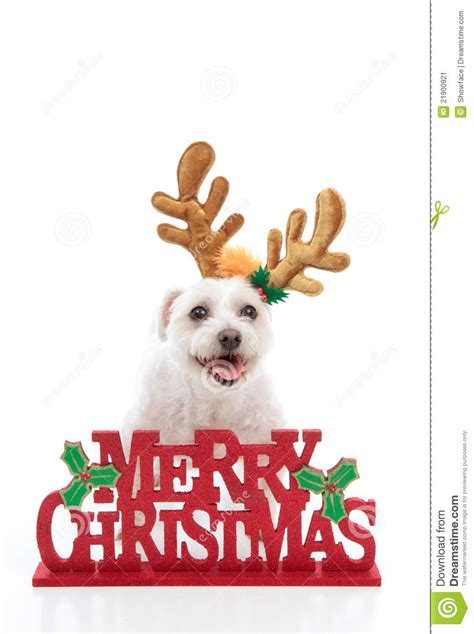 pet  merry christmas message stock image image  religious pure