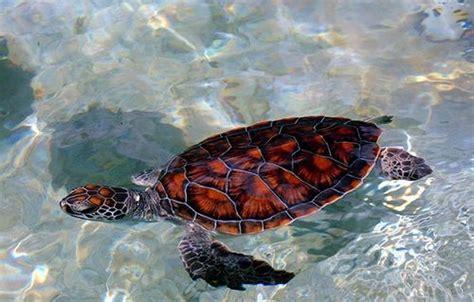 boatswain s beach grand cayman boatswain s beach turtle farm cayman flickr photo