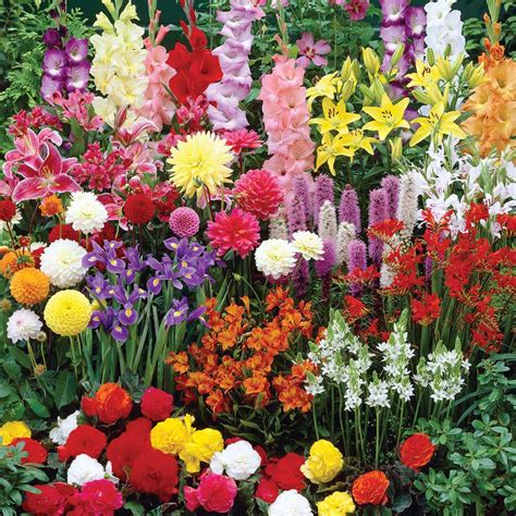 Bulb Garden Ideas An Introduction To Bulb Flowers Landscaping Gardening Ideas