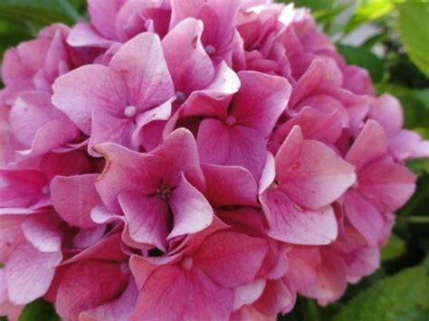 imagenes flores invierno cu 225 les son las flores de invierno elblogverde com