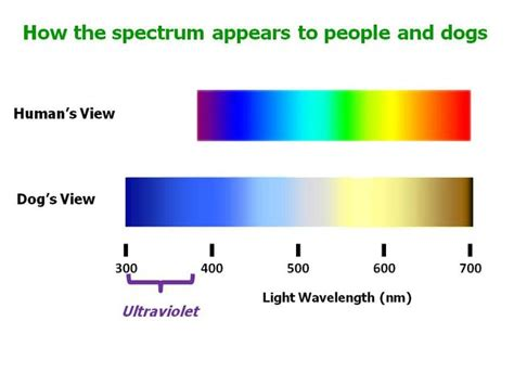 cat color vision can dogs see in ultraviolet psychology today