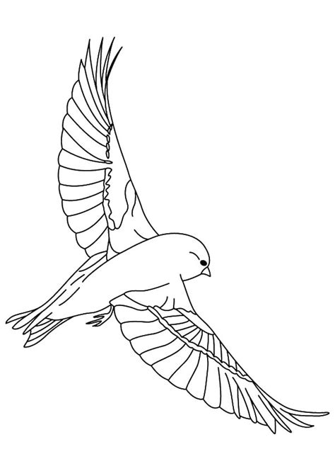 owl wings coloring page canary bird sketch coloring pages best place to color