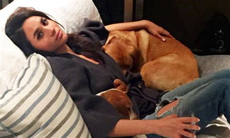 meghan markle dogs meghan markle s dogs won t move with to uk immediately