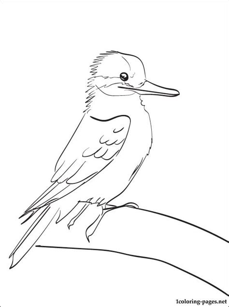 kookaburra coloring page free kookaburra printable and coloring page coloring pages