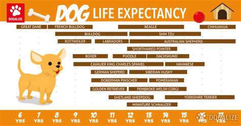dogs lifespan expectancy of dogs dogalize