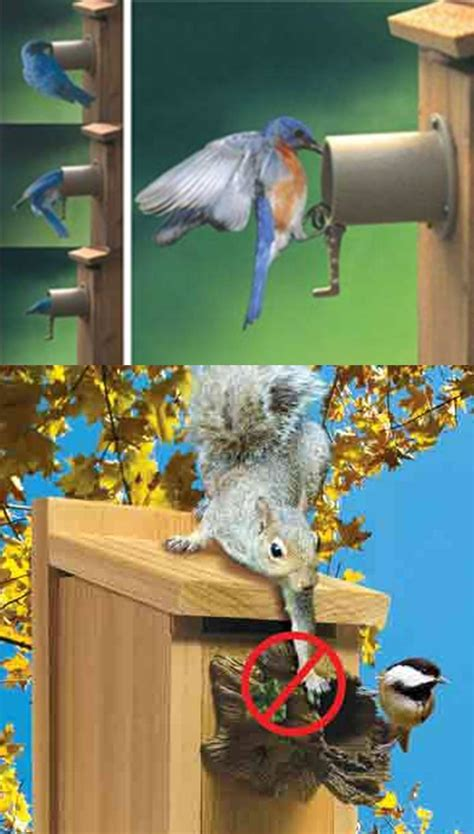 wild birds unlimited 5 tips to attract birds to nest in