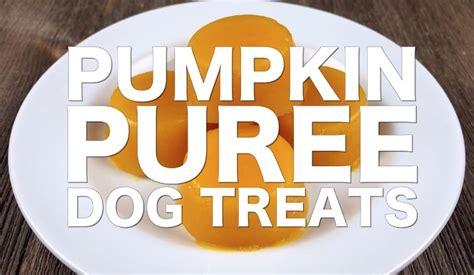 pumpkin puree for dogs diy pumpkin puree treats cookingforsugar