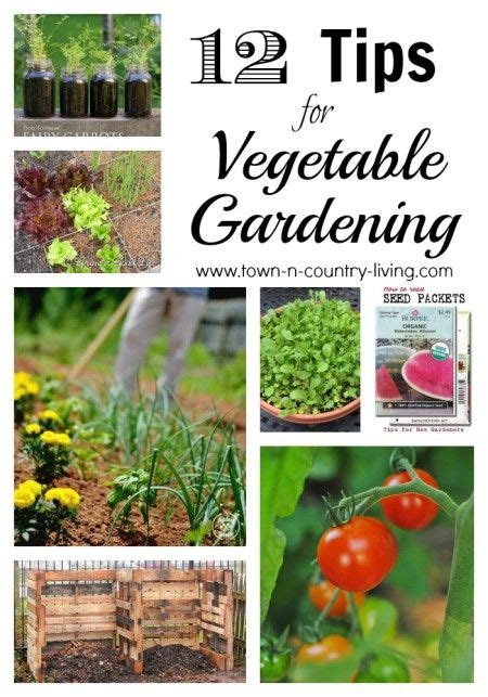 vegetables starting with e starting a vegetable garden vegetable gardening and seed
