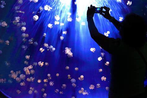 costo ingresso acquario genova acquario di genova un viaggio speciale in fondo al mare