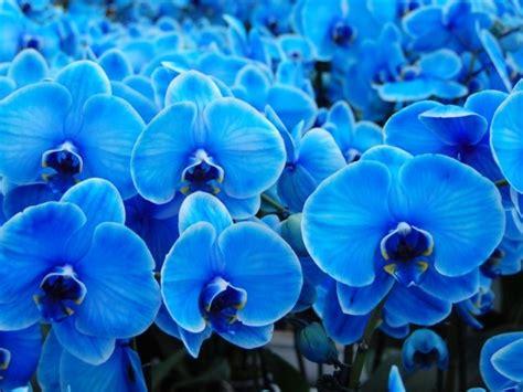 Orchid 233 Es Bleues Injections Et Bistouri Leurs Secrets