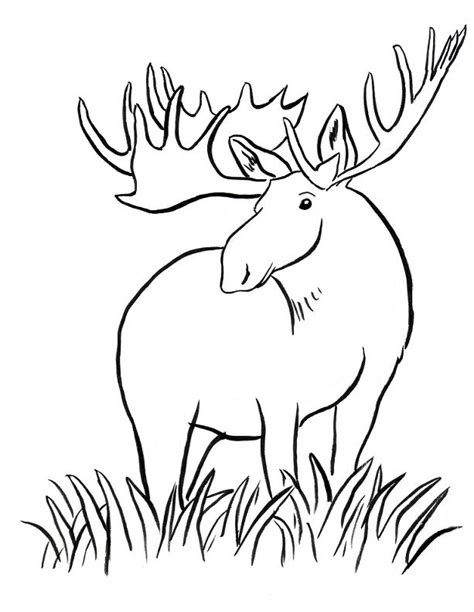 cute moose coloring pages picture of moose coloring page kids play color moose