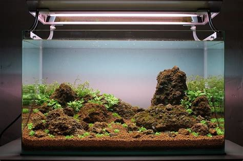 design aquascape murah cara membuat aquascape sederhana atagaleri net