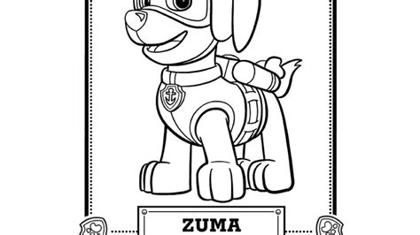 zuma coloring page paw patrol paw patrol paw patrol meet zuma colouring pages for
