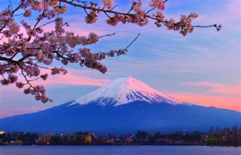 imagenes monte fuji japon el bosque de aokigahara la meca de los suicidas en jap 243 n