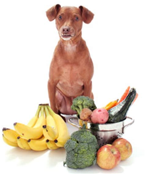 vegetables safe for dogs how to make food a complete guide