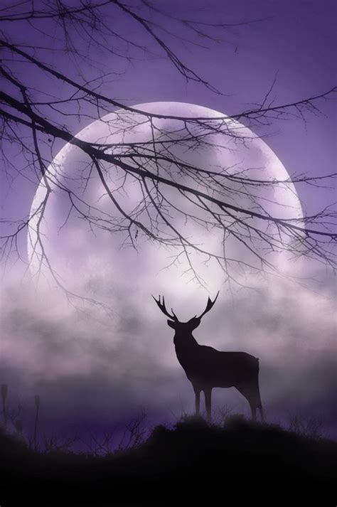 here comes the buck moon usatodaycom 50 charming moonlight photography ideas and tips greenorc