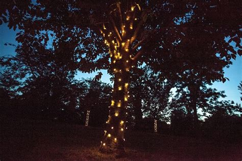 installation of fairy lights in trees dreamwave lighting lights dreamwave lighting