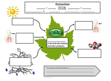 flowchart chapter 8 photosynthesis graphic organizer answers photosynthesis and cellular respiration graphic notes