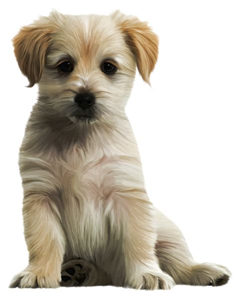 puppy png nos amis chats et chiens