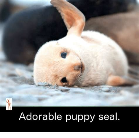 puppy seal adorable puppy seal meme on sizzle