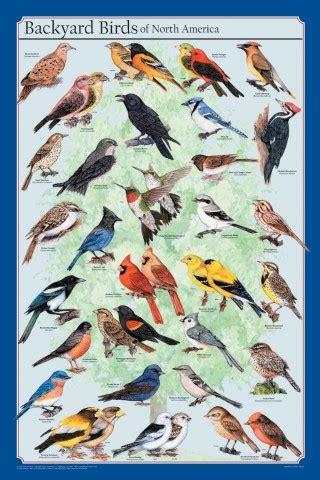 backyard birds of north america north american bird nature study startsateight