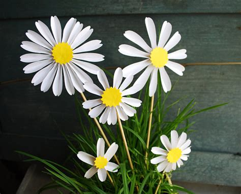 daisy paper flower pattern daisy paper flowers spring blossomsbirthday gift daisies
