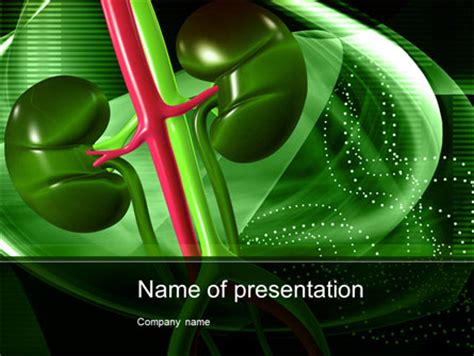 powerpoint templates kidney free human kidneys powerpoint template backgrounds 10363