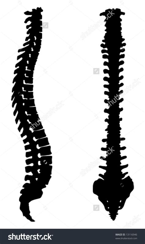 human spine clipart clipground