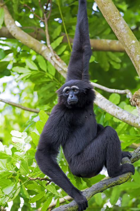 why do monkeys swing on trees are you goofing off at work subbuiyer s blog