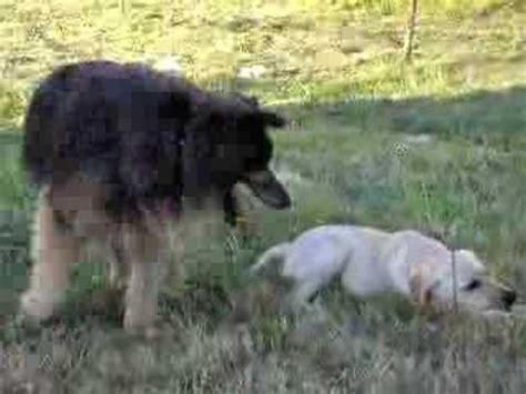 sesso col cuscino cagnolino arrapato