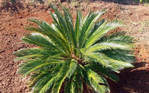 indoor plant suppliers  dubai plant suppliers  dubai